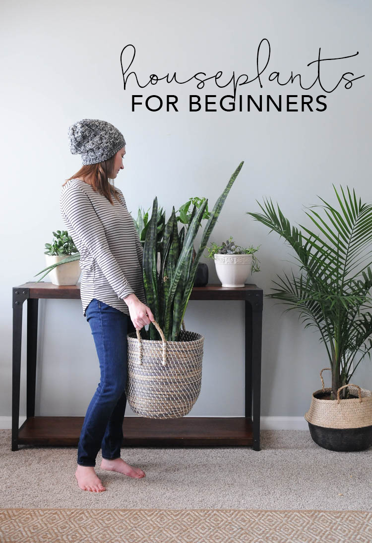 Houseplants for Beginners