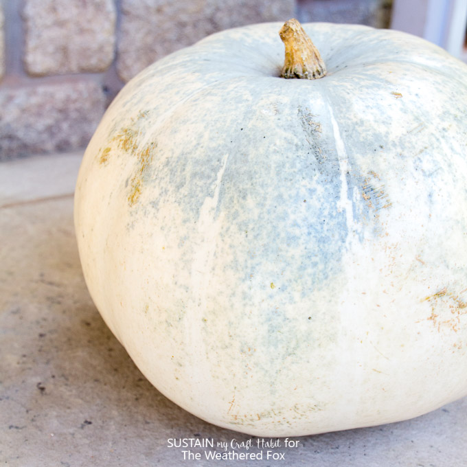 Neutral blue and white pumpkin and printable watercolor pumpkin art