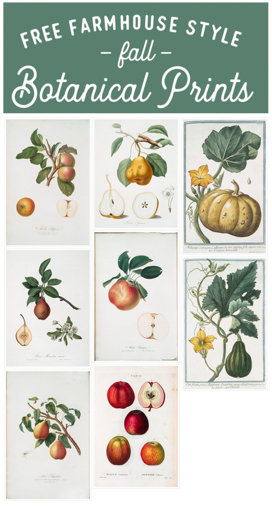 Farmhouse Style Fall Botanical Prints Round-Up! Free and cheap botanical prints for your fall decor. Fall printables.