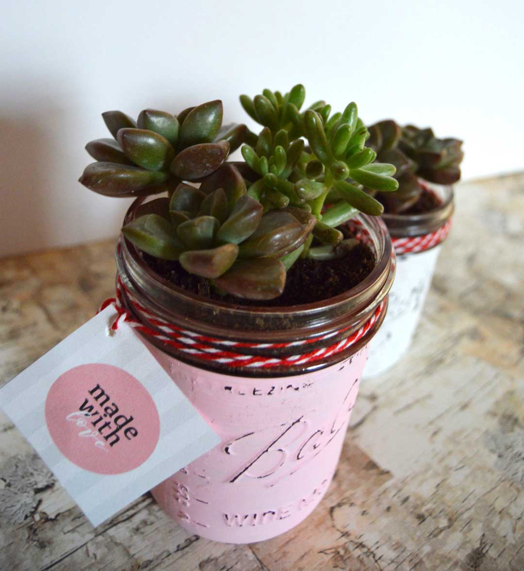 Chalkpaint Mason Jar Succulents with free printable gift tags